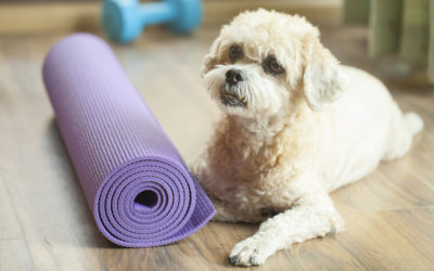 What Do Dogs & Gyms Have in Common?