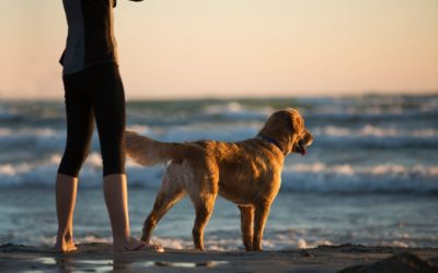 National Pet Day Blog: 5 Benefits to Pet Ownership